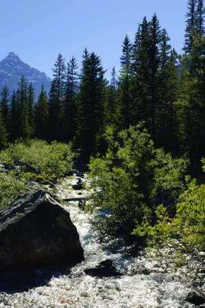 crick: Paesaggio forestale Archivio Fotografico