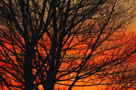 Deciduous tree at sunrise Stock Photo