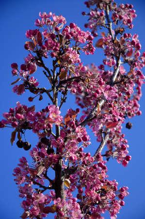 Purple flowers on tree