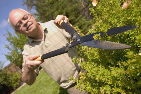 trimmers: Hedges being trimmed