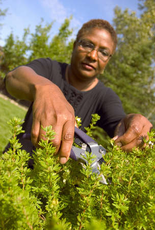 trimmers: Woman cutting hedge