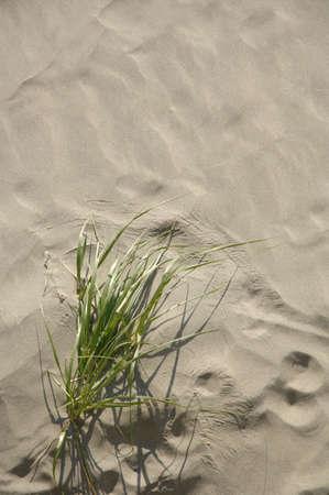 muz: Closeup of sand and grass