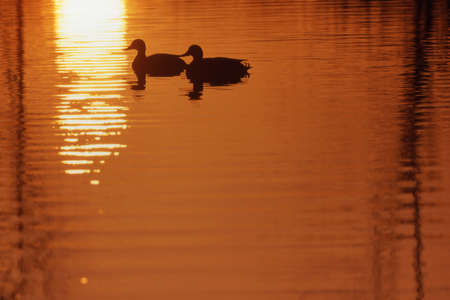 Two ducks on the water Stock Photo - 6215903
