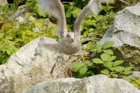 A bird takes off