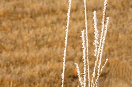 muz: Closeup of frost