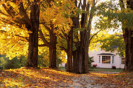 chapman: A beautiful home in autumn