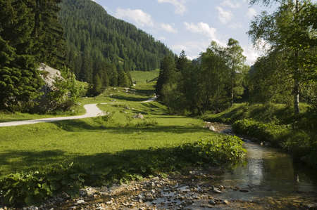 natural selection: Alpine landscape with stream