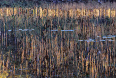 natural selection: Autumn grasses and reflection in pond Stock Photo