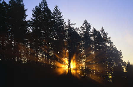Sun beams through silhouetted trees.