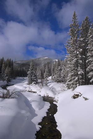 carson ganci: Wilderness creek