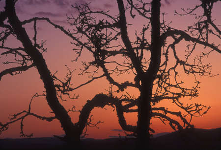 silhoutted: Trees silhoutted against a beautiful sunset Stock Photo