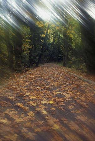 taken: Pathway in forest