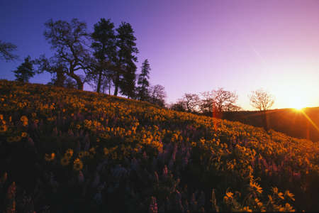 tuttle: Low-angle view of hill at sunset with trees and blooming flowers.
