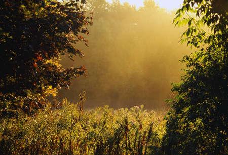 natural selection: Fog and foliage