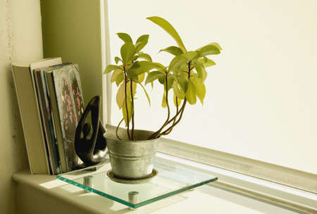 indoors: Window sill