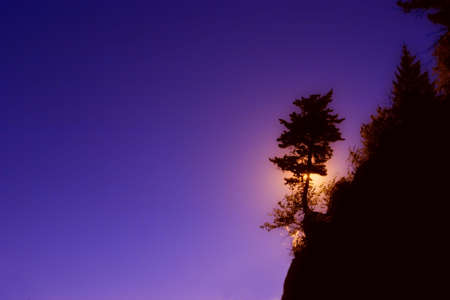 steve nagy: Silhouette of tree on a hill Stock Photo