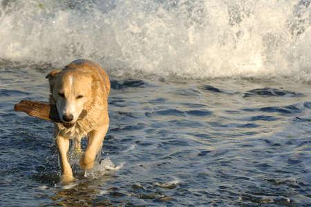 dean lake: Dog retrieving a stick