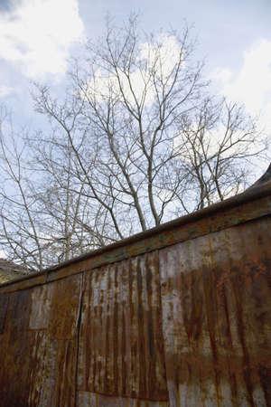 oxidado: �rbol y pared oxidado Foto de archivo