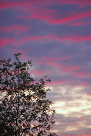 leah: Silhouette of a tree at sunset