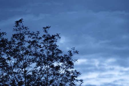 warkentin: Silhouette of tree Stock Photo