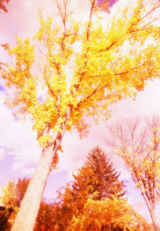 glubish: trees