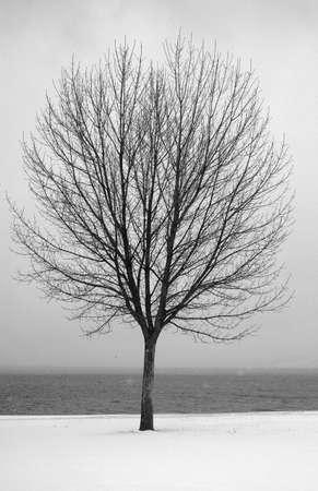 Bare tree all alone Stock Photo - 6216967