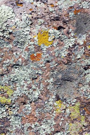 raniszewski: Lichen on rock surface Stock Photo