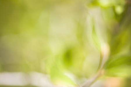 raniszewski: Out of focus leaves