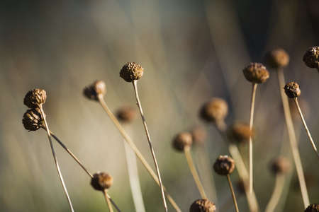 raniszewski: Dry whimsical plant in desert