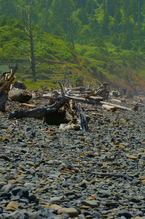 Rocky beach and forest Stock Photo