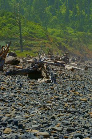 muz: Rocky beach and forest Stock Photo