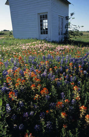 outbuilding: Outbuilding in field of blooming flowers