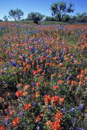 pinchbeck: Field of wildflowers in bloom Stock Photo