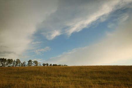 glubish: Dry field of grass Stock Photo