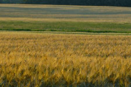 muz: Farmland