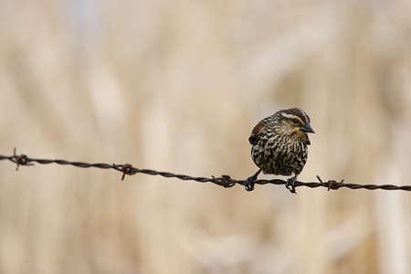 wildanimal: Bird on a wire