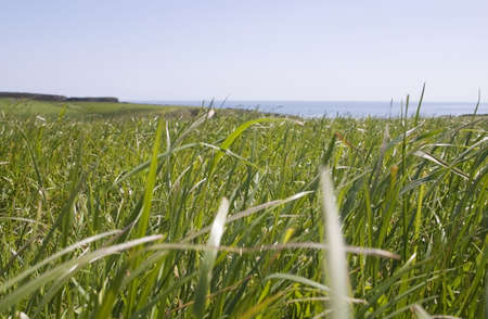 Grass, Pastoral Field, Copper Coast, Co Waterford, Ireland Stock Photo - 7188607