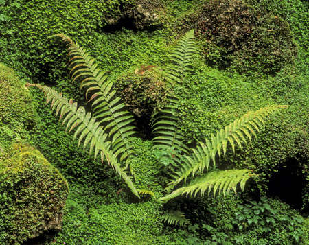 co  meath: Fern and Moss in a Japanese Garden, Powerscourt Gardens, County Wicklow, Ireland Stock Photo