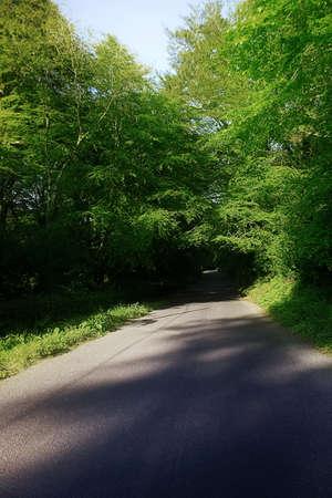 Country Road & Trees, Stradbally, Co Waterford, Ireland photo