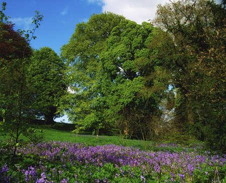 Wild Garden in Ireland Stock Photo - 7187986
