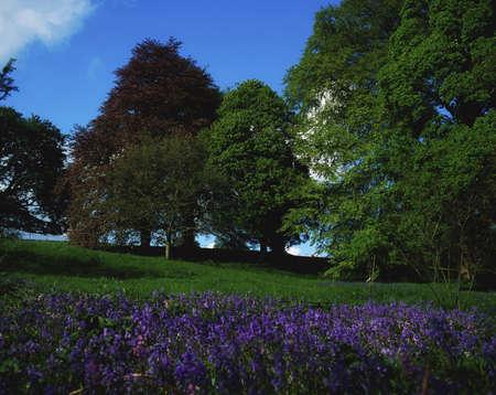 Wild Garden in Ireland Stock Photo - 7188110