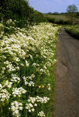 the irish image collection: Country Road & Wildflowers, Co Armagh, Ireland
