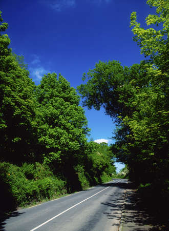 Road in the West Shore, Lough Swilly, Ireland Фото со стока - 7188319