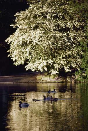 co  meath: Dublin - Parks, Saint Stephens Green, Ireland Stock Photo