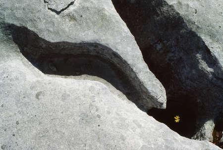 Co Clare, The Burren, Wildflowers, Ireland Фото со стока - 7188162