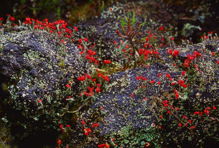 Bog Plant, The Murrins, Co Tyrone, Ireland