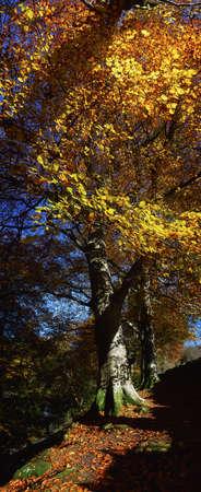 panoramics: Sunlight streaming through a tree Stock Photo