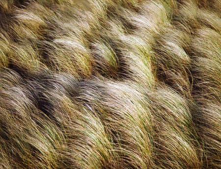 fullframes: Marram grass