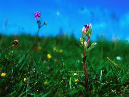 Wild flowers Stock Photo - 7188558
