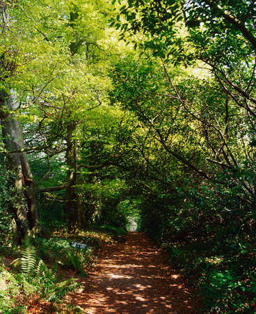 woodland sculpture: Path in a forest Stock Photo